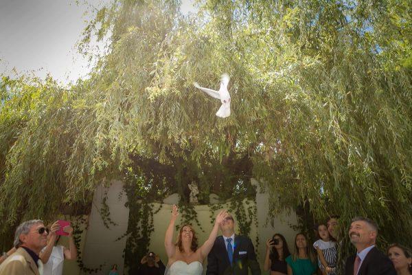 Galeria de Fotografias de Casamentos 0848 diogogarcia